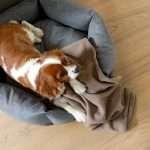 Kompozitná podlaha GreenTec Dub Timbara hnedý EHD023 5